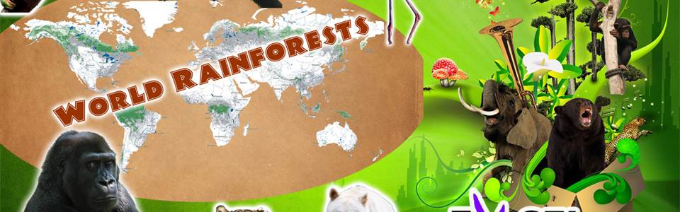 World Rainforest Programme